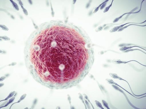 un-sperme-abondant