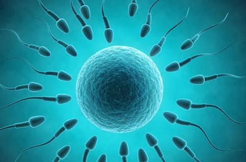 Régénération et Renouvellement du sperme : Et si on en parlait !